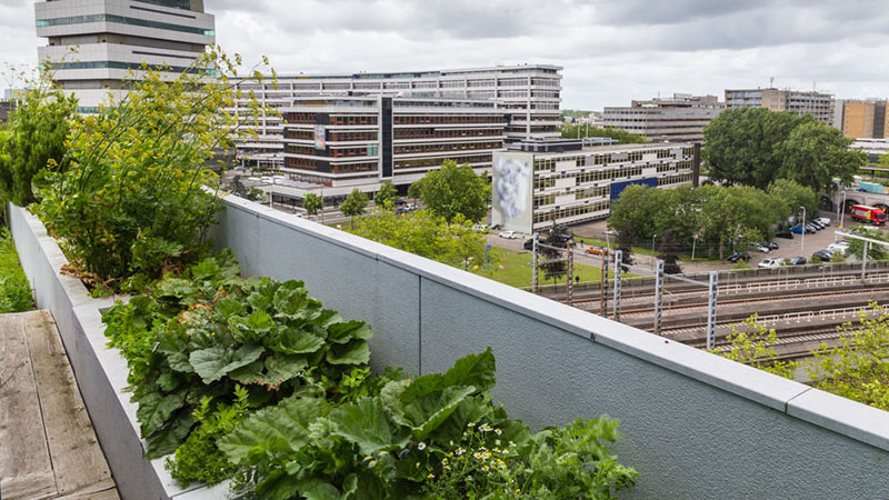 Vegetable roofgarden on top of an office building in the citycenter of Rotterdam, Netherlands